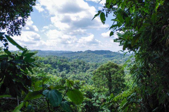 visiter la foret amazonienne en Équateur